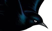 Blackbird, el nuevo disco de Fat Freddy's Drop